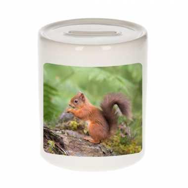 Dieren foto spaarpot eekhoorntje 9 cm eekhoorntjes spaarpotten en meisjes