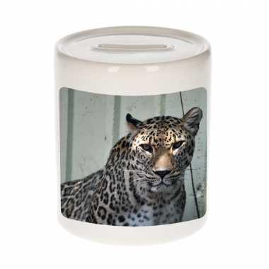 Dieren foto spaarpot gevlekte jaguar 9 cm jaguars spaarpotten en meisjes