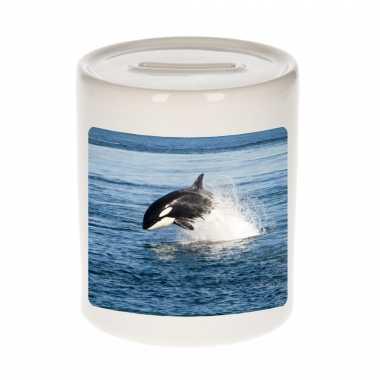 Dieren foto spaarpot orka 9 cm orka vissen spaarpotten en meisjes